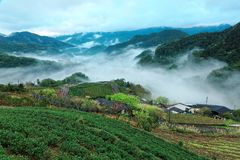Early morning scenery of tea gardens in fresh spring atmosphere with ethereal fog in the distant valley Stock Photos