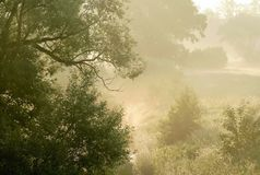 Early morning scenery with trees in the fog Royalty Free Stock Photos