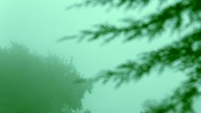 Focus Shift of tree leaf, early morning smoke, mist. Early morning smoke, mist, nature background stock video footage