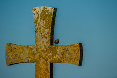 Early Morning Song. The singing starling sitting on a medivial cross early in the morning Royalty Free Stock Images