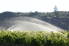 Early Morning Sprinkling in the Vineyard Stock Images