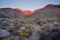 Wildflowers And Morning Light On Taboose Pass Stock Images