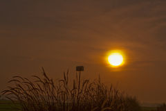 Early morning sun. Silhoutte early morning sun at farm Royalty Free Stock Photo