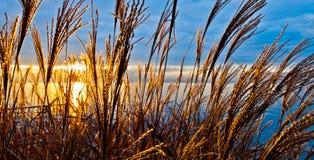Early Morning Sun. Rising sun shot through wild plants stalk Royalty Free Stock Photo