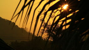 Early morning sun comes up through coconut trees at sunrise stock video footage