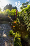 Early morning sun flare into garden Stock Images