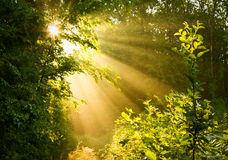 Early morning sun in forest Stock Photography