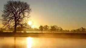 Early morning sun rise bushy park lake with mist rising stock video