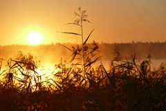 Early morning. Sun rising early morning sweden royalty free stock photos