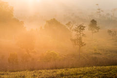 The early morning sun shines through rural field and morning fog Royalty Free Stock Photos