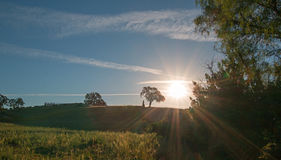 Early morning sun shining next to Valley Oak tree on hill in Paso Robles wine country in the Central Valley of California USA Royalty Free Stock Photo