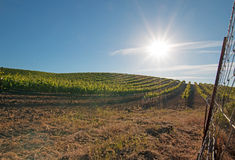 Early morning sun shining on Paso Robles vineyards in the Central Valley of California USA. Early morning sun shining on Paso Robles vineyards in the Central stock photo