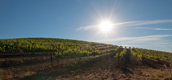 Early morning sun shining on Paso Robles vineyards in the Central Valley of California USA Stock Photo