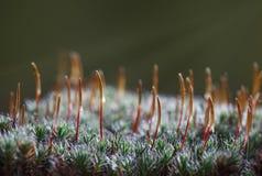 Early morning sunbeams on moss Stock Photo