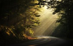 Early Morning Sunbeams in the Woods. Morning in the woods and deer crossing the road behind the sunbeams Royalty Free Stock Photos