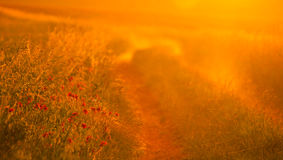 Early morning sunlight Royalty Free Stock Images