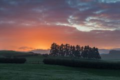 Early morning with sunlight and colorful sky, meadow and trees. Nature photo. Beautiful autumn landscape in New Zealand. royalty free stock photo
