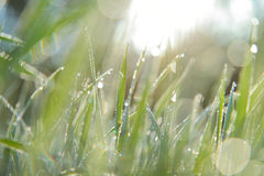 Early morning, sunlight morning dew Stock Photography