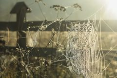 Autumn Grass Field. Early Morning Sun. Sunlight Reflect in a Cobweb. royalty free stock images