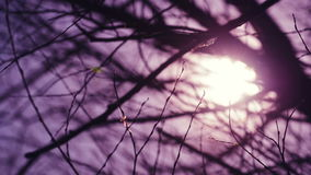 Early Morning Sunlight Shines Through Bare Tree Branches stock video footage