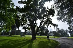Early morning sunrise in Auckland city park stock photography