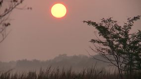 Early morning. Sunrise. The solar disk rises from behind the trees stock video