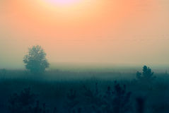 Early morning sunrise with mist Royalty Free Stock Photography