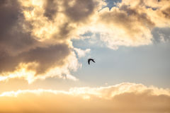 Early morning sunrise over the sea and a flying bird royalty free stock photography