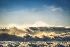 Early morning sunrise over the sea and a flying bird seagull Royalty Free Stock Images