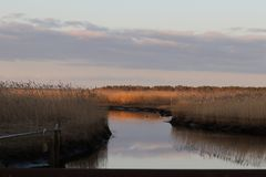 Sunrise on the Jersey Pine Barrens stock image