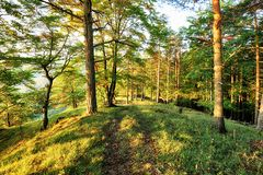 Early morning with sunrise in pine forest Stock Image