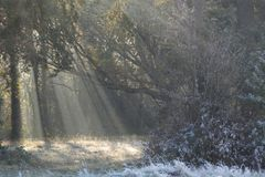 Early morning sunshine on a frosty day on Southampton Common stock image