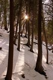 Early morning sunshine streaming through copse of trees, with ground covered in freshly fallen snow. Peaceful woodsy scene with freshly fallen snow covering stock images