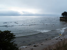 Early morning surfing in Santa Cruz CA. Large crowd, gentle waves for beginners stock images