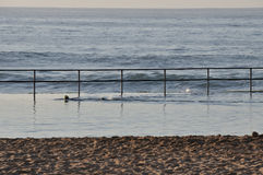 Early morning swimmer. At a rock pool stock photography
