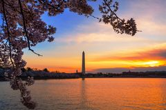 Early Morning at Tidal Basin in Washington DC, during the Cherry Blossom Festival with monument on other side. Dawn at Tidal Basin in Washington DC, during the stock photography