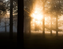 Early morning trees in the mist. Light coming through the trees early one misty morning stock photo