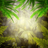 Early morning in the tropical forest vector illustration