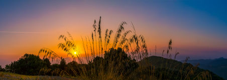 Early morning in Tuscany. Sunrise at early morning in Tuscany with grass in the front Stock Photography