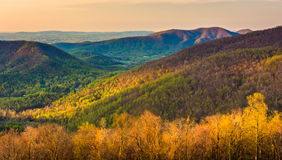 Early morning view of the Appalachian Mountains from Skyline Dri Stock Image