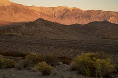 Morning view of hills, mountains, desert valley, wildflowers Eastern Sierra Nevada mountains, C royalty free stock images