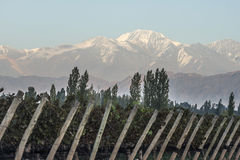 Early morning in the vineyardsin Maipu, Mendoza Stock Images