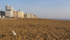 Early Morning on Virginia Beach Royalty Free Stock Photography