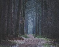 Early morning walk on forest path darkness ahead royalty free stock image