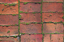 Early Morning Walkway. Brick pavers with moss in early morning light stock image