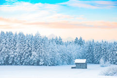 Early morning winter rural landscape with snow-covered forest Stock Images