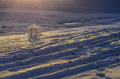 The early morning. Winter morning, the sun had settled on the snow Royalty Free Stock Image