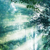 Early morning in the wood. Forest illuminated by the morning su Stock Photography
