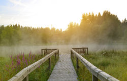Early morning at wooden pier. On lake in Germany Stock Photography