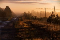 Sunlit road, pine trees, power poles and forest. Early, mystical, misty autumn morning in the countryside, sunlit road, pine trees, power poles and forest in the royalty free stock photography